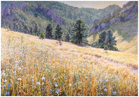 Wildflowers in Gregory Canyon, Boulder Colorado
